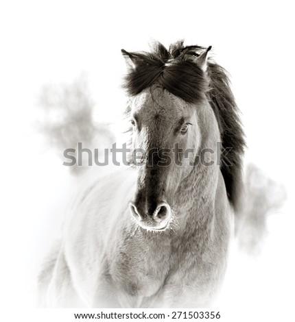 wild horse in sepia tones - stock photo