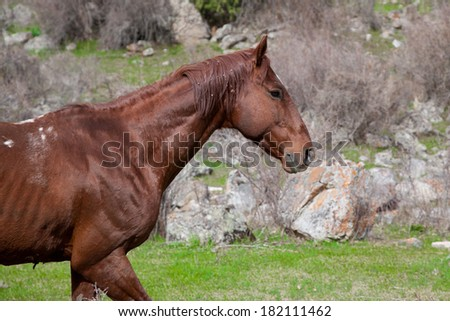 Wild horse in the mountains of Kyrgyzstan - stock photo