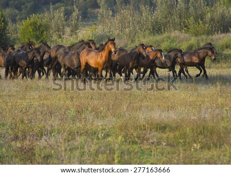 Wild horse running - stock photo