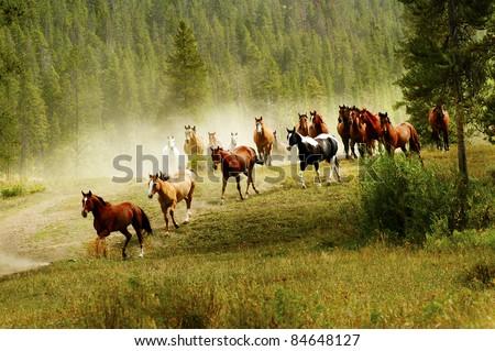 Wild Horses - stock photo