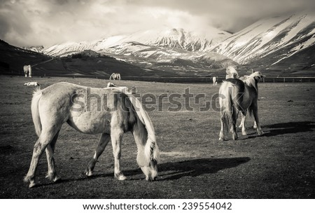 Wild horses grazing in the mountains. Photo taken in low key. - stock photo