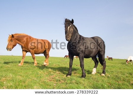 Wild horses grazing on mountain meadow - stock photo