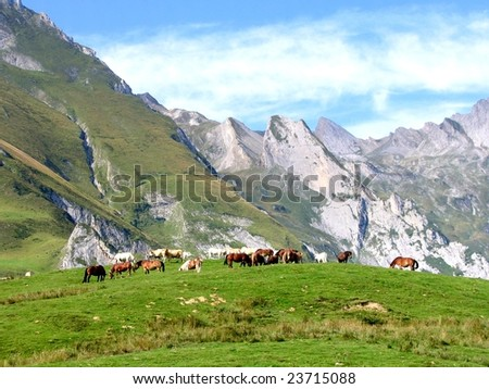 Wild horses grazing with mountains in background. Location is: Col du Solor, Pyrenees, France - stock photo