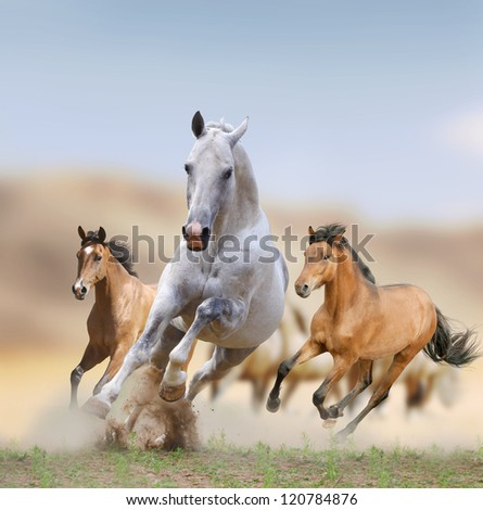 wild horses in desert - stock photo