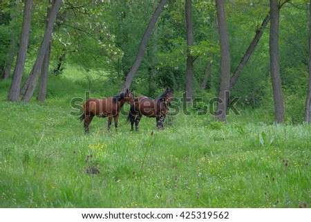 wild horses in forest