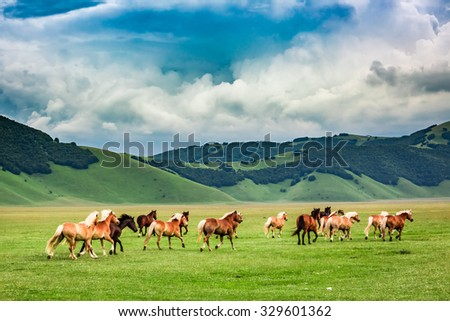 Wild horses in valley near Castelluccio, Umbria, Italy - stock photo