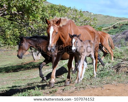 Wild horses in volcano crater at Easter Island - stock photo