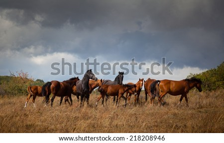 Wild horses. Landscape, an autumn wood on a background of the cloudy sky.