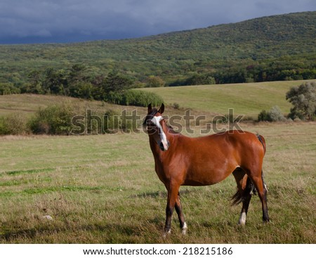 Wild horses. Landscape, an autumn wood on a background of the cloudy sky. - stock photo