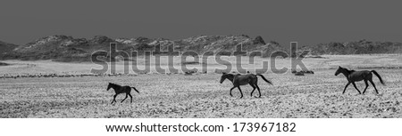 Wild Horses Namibia Slide 22 black and white