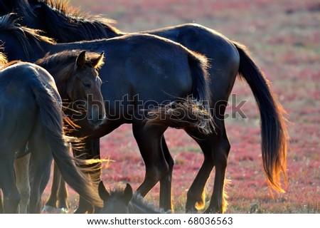 wild horses on field in summer - stock photo