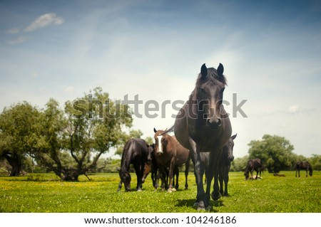 wild horses on green grass in nature - stock photo