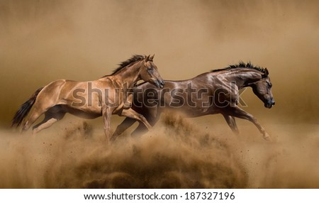 Wild horses running - stock photo
