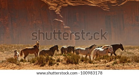 Wild horses walking through the desert in the Monument Valley area of Utah