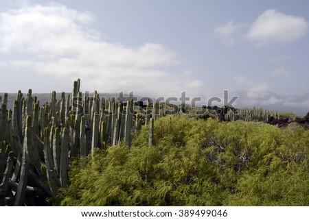 wild landscape in Tenerife, coastal volcanic scenery - stock photo