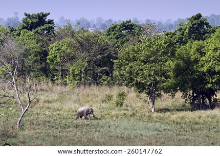 Wild landscape with asian elephant in Bardia national park, Nepal  - stock photo