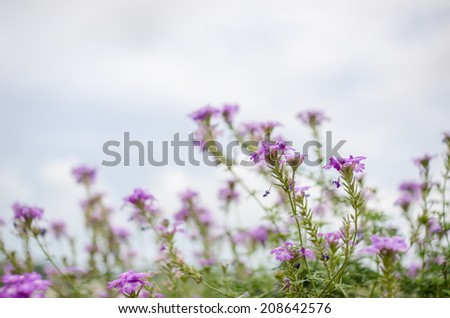 Wild little flowers in the garden or nature park Thailand - stock photo