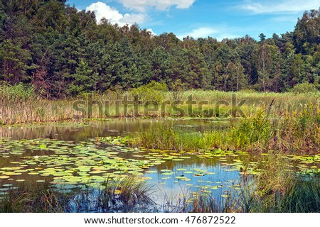 wild marsh area in Poland