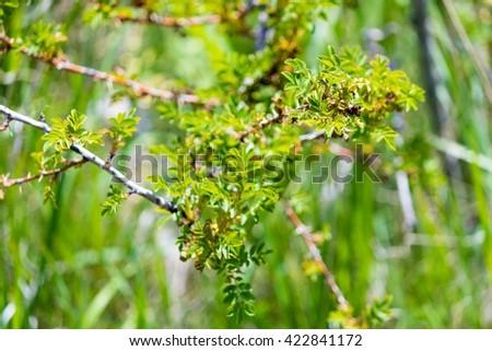 Wild mountain flower and shrubs - stock photo