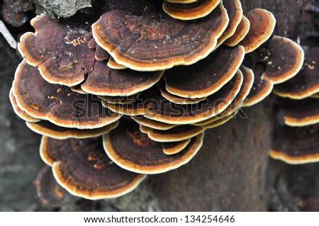 Wild mushroom - stock photo
