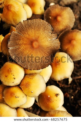 Wild mushrooms - stock photo