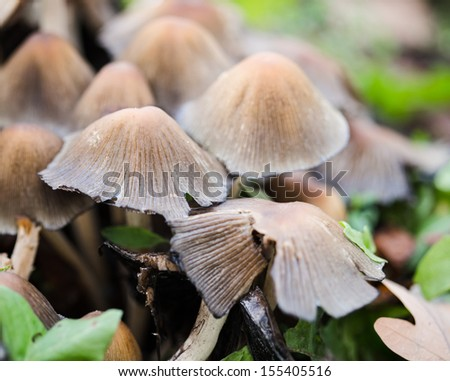 wild mushrooms on the ground with green leaves - stock photo