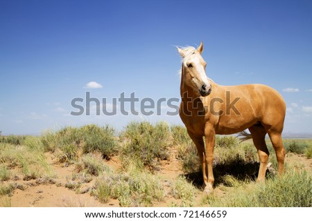 Wild mustang horse glazing in desert - stock photo