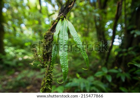 Wild orchid flower growing in deep mossy tropical rain forest. Nature background - stock photo