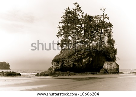 Wild Pacific beach landscape on a stormy day with trees growing on a sea stack - stock photo