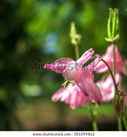 Wild pink flowers bells on a blurred background in the field. vertical