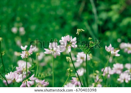 Wild pink flowers green grass tinted stock photo royalty free wild pink flowers in green grass tinted stylish photo mightylinksfo Image collections