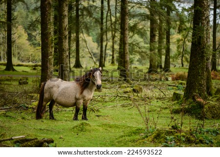 Wild pony in autumn scenery forest in Dartmoor National Park