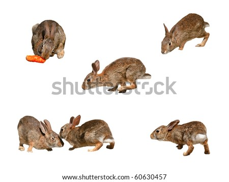 Wild rabbits collage page 2 on pure white background - stock photo