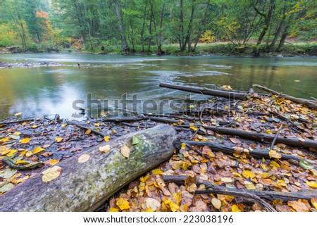 wild river in woodlands. wild landscape in poland - stock photo