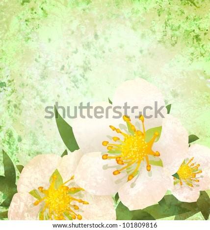 wild roses white flowers grunge vintage style illustration - stock photo
