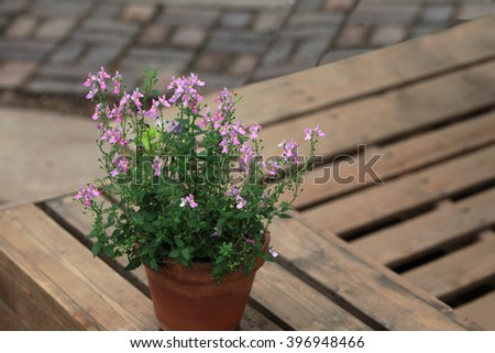 Wild Snapdragon Flower in planter over wooden pattern background - stock photo