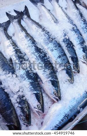 Wild sockeye salmon for sale in ice  - stock photo