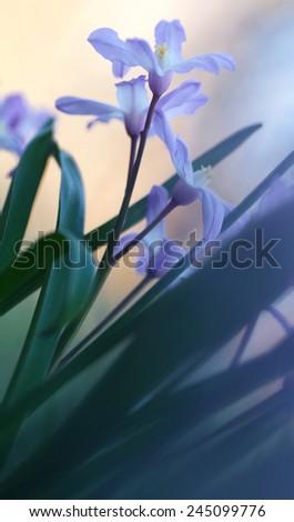 wild spring flowers  close-up. soft focus, blur flower. flower background - stock photo