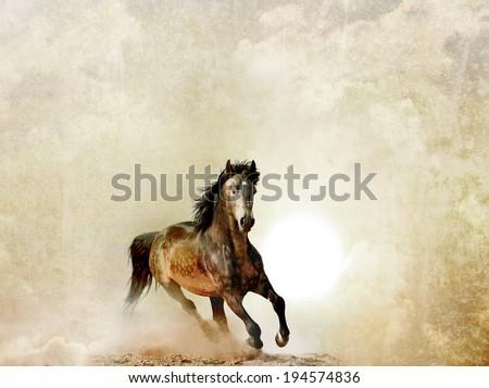 wild stallion background - stock photo