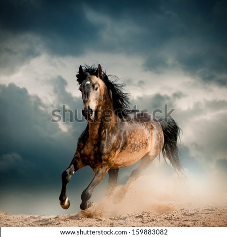 wild stallion in dust - stock photo