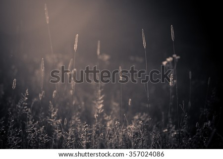 wild summer meadow with grasses backlit by sun light, monochromatic blue orange image - stock photo