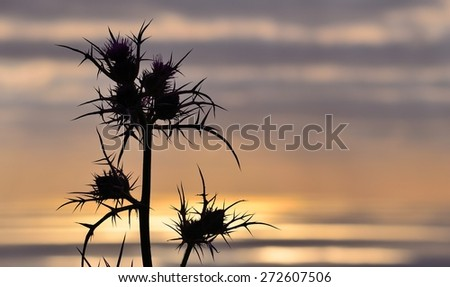 Wild thistle in foreground on skyline background at sunrise - stock photo