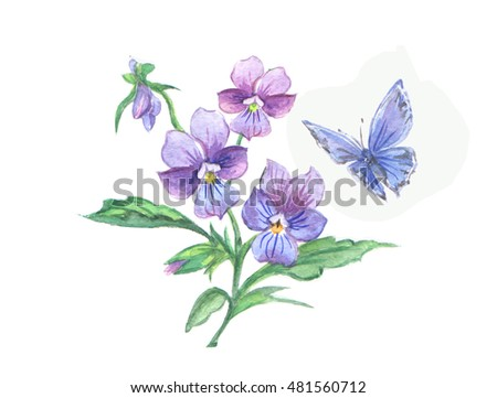 Wild violets and blue butterfly. Bunch of violets watercolor.