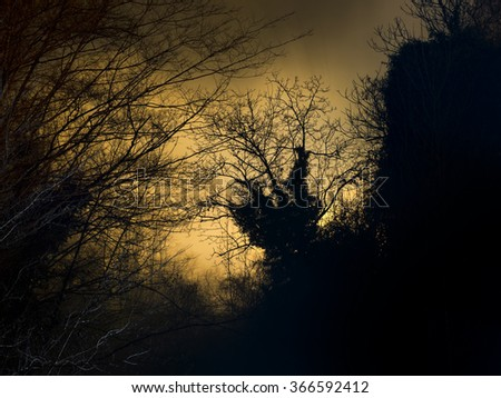 Wild woods night background. Spooky shapes against the sky. - stock photo