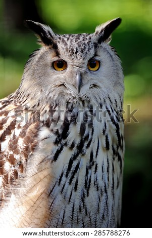 Wild young owl isolated on green background - stock photo