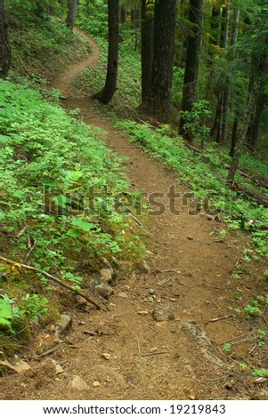 Wilderness hiking trail winds through an Oregon forest. Focus is at the foreground. - stock photo