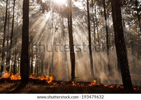 wildfire at Mae Hong sorn, Thailand - stock photo