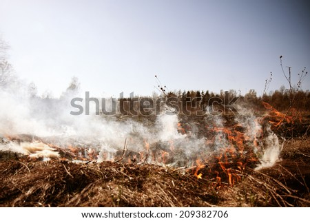Wildfire. Fire. Global warming, environmental catastrophe. Concept man helpless before a natural disaster. Protection of the environment. Survival, the preservation of life - stock photo
