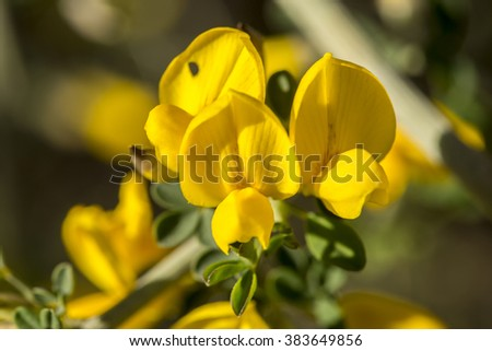 Wildflower - stock photo