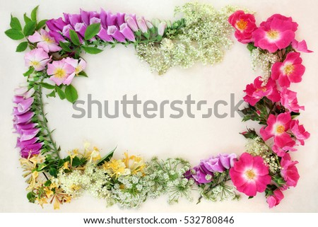 Wildflower border with english flowers used in natural alternative herbal medicine forming an abstract background.